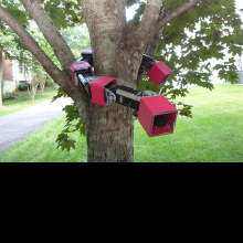 SnakeRobot holding onto a tree, and perched in a tree